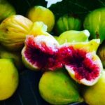 smell of fresh figs