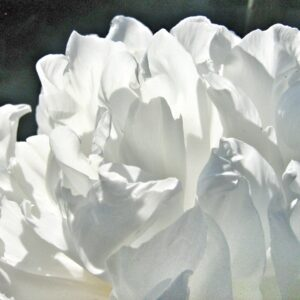 Blanc Atelier Des Ors tuberose