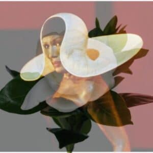 Grace Jones gardenia